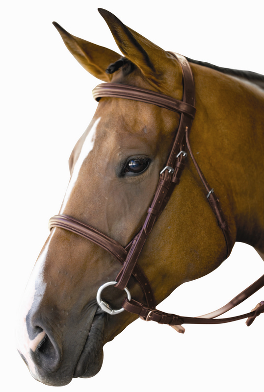 Kincade Padded Square Raised Bridle