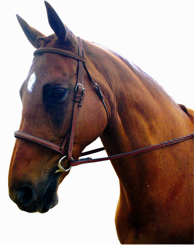 Kincade Raised Padded Fancy Stitched Bridle