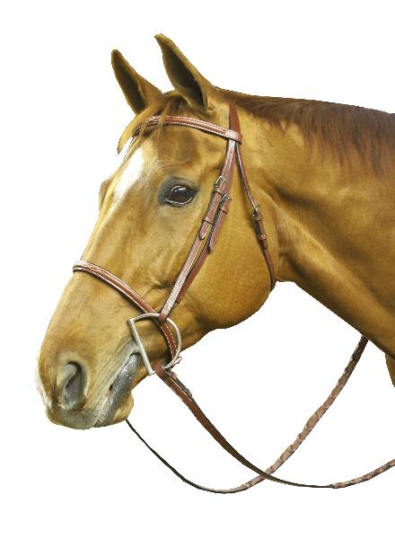 Collegiate Raised Fancy Stitched Bridle