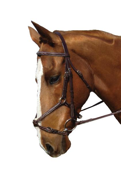 Collegiate Figure 8 Noseband Bridle