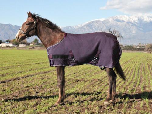 Kensington Egyptian Cotton Foal Show Sheet
