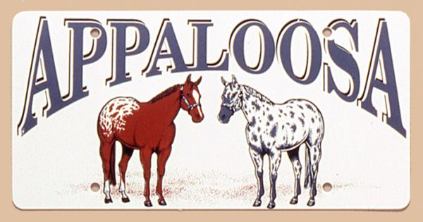 Gift Corral Appaloosa Horses Plastic License Plate