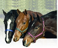 Replacement Breakaway Halter Set