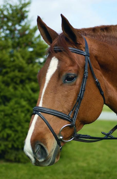 Henri de Rivel Event Bridle With Flash And Rubber Rein Pro