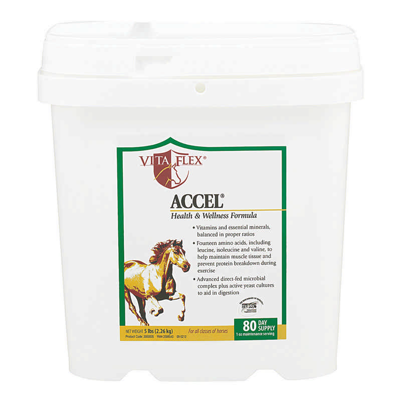 Vita Flex Accel - Horse Supplement