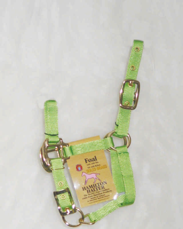 Hamilton Nylon Adjustable Halter For Foals