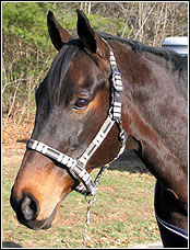 TuffRider Plaid Covered Halter