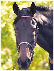 Henri de Rivel Advantage Fancy Raised Snaffle Bridle