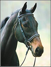 Henri de Rivel Dressage Bridle without Flash