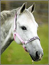 JPC Padded Nylon Halter (I Love My Pony)