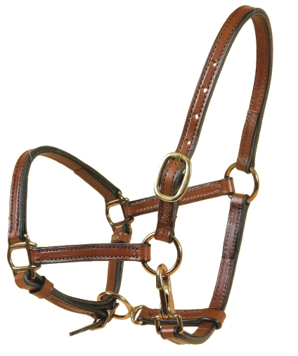 TORY LEATHER Weanling Halter - Crown Buckle & Brass Hardware