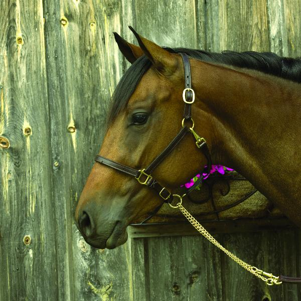 "Perri's 3/4"" Premium Leather Show Halter"