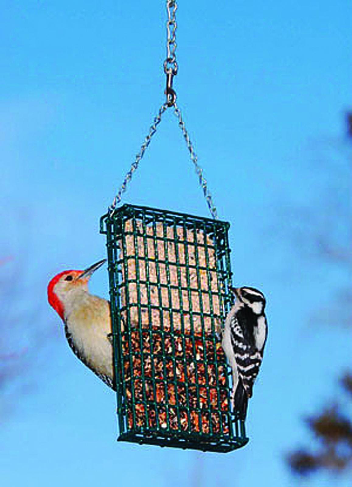 Droll Yankees Double Suet Bird Feeder