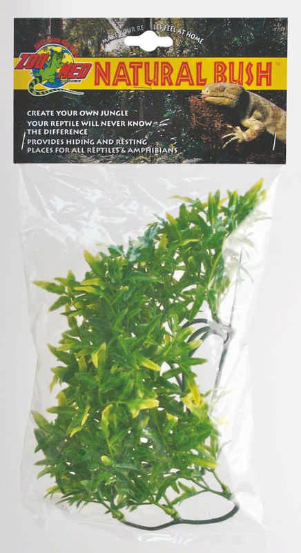 Plant Bolivian Croton
