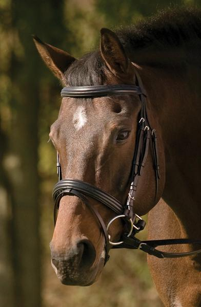 Henri de Rivel Raised/Padded Dressage Bridle with Jawband Crank & Flash with Web Reins