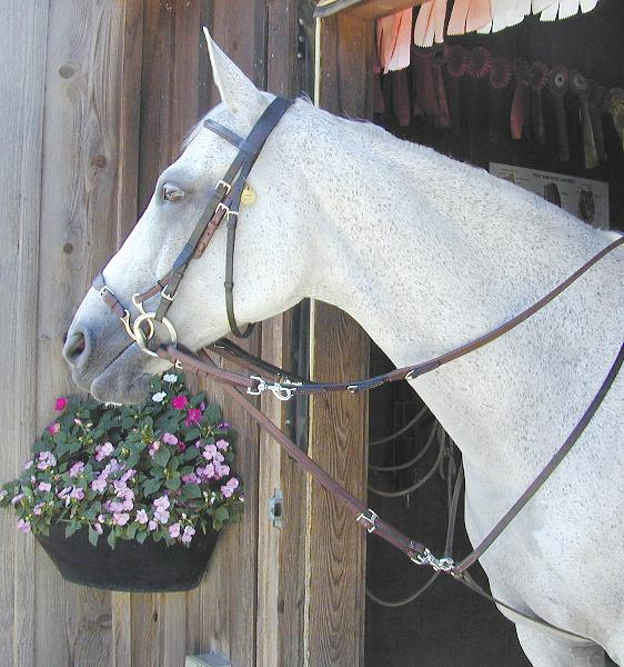 Nunn Finer German Martingale Rein Set