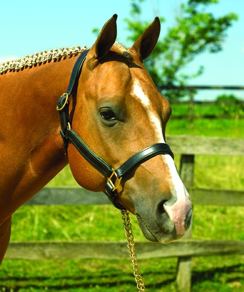 Perri's Soft Padded Leather Halter