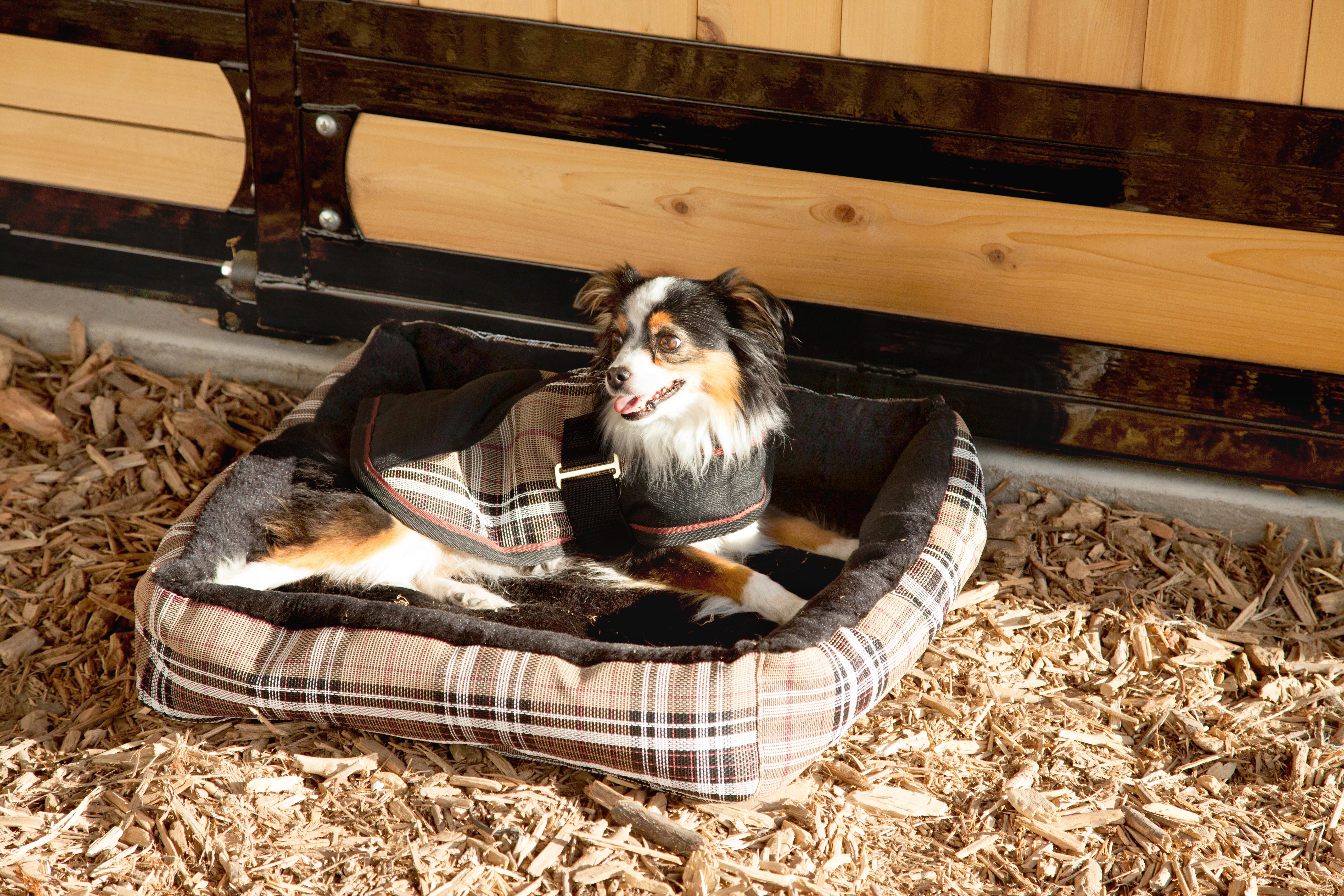 Kensington Dog Turnout Blanket