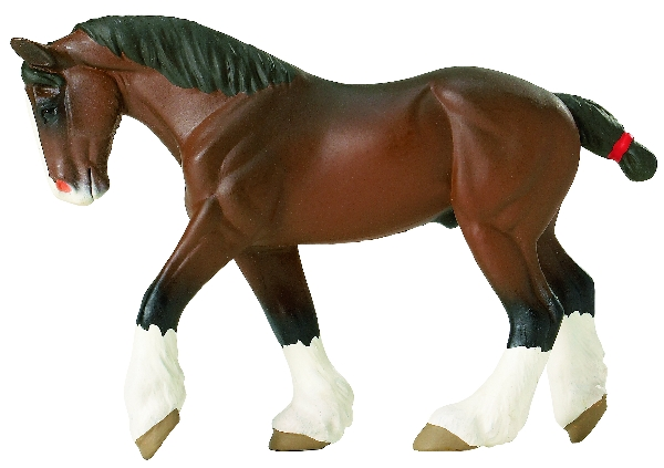 Clydesdale Adult