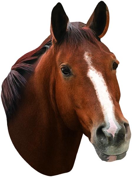 Horse Head Gift Card