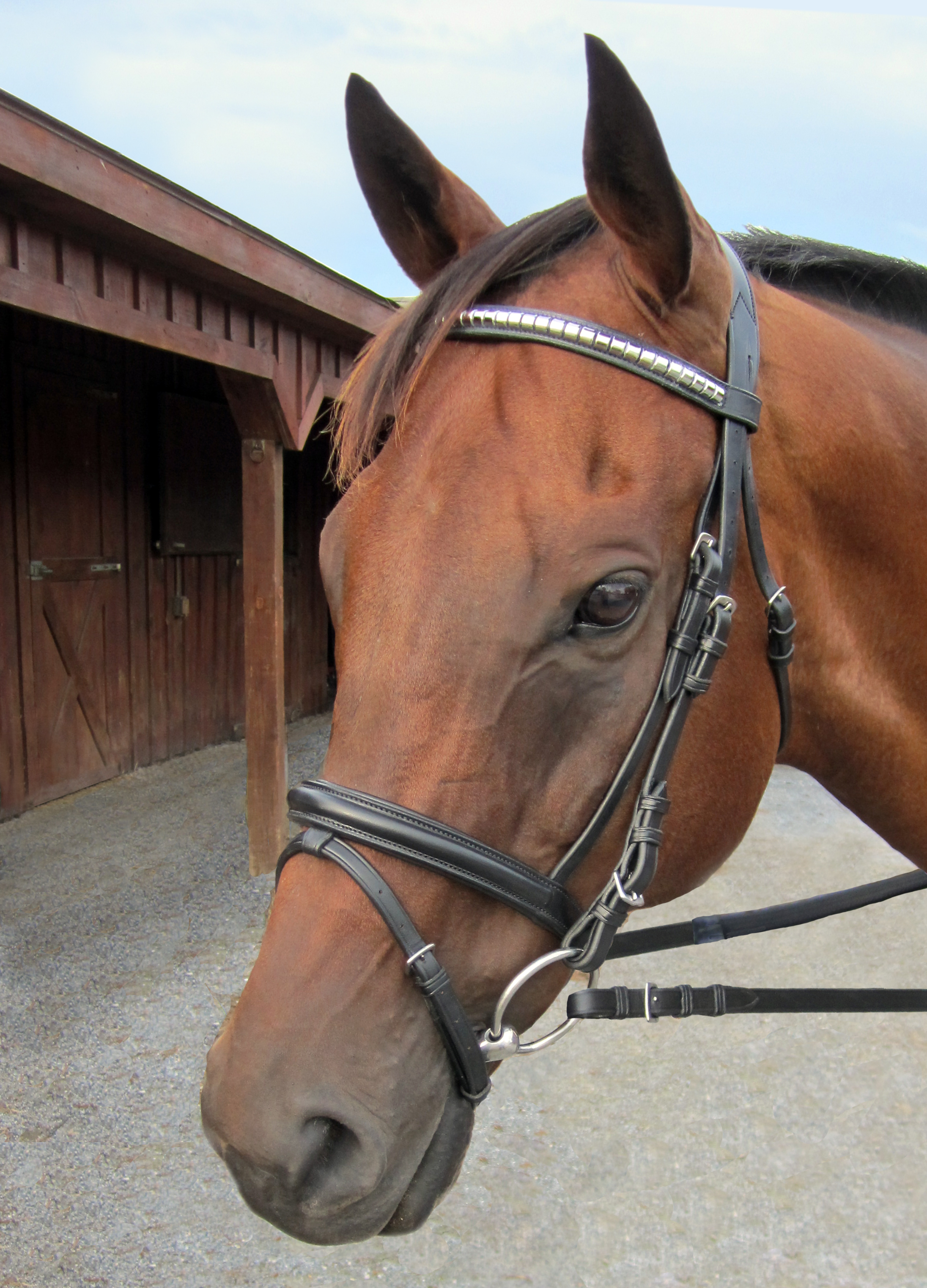 Nunn Finer Biko Dressage Bridle with Silver Clincher Browband