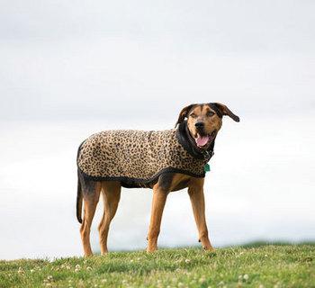 Rambo Newmarket Dog Rug