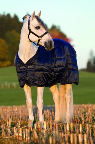 Horseware Mio Stable Rug MW