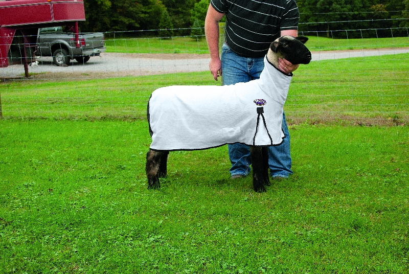 Weaver Leather's ProCool Mesh Sheep Blanket