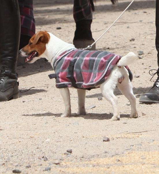 EOUS Dog Fleece Plaid