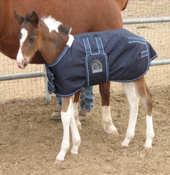 EOUS HW Foal Rug