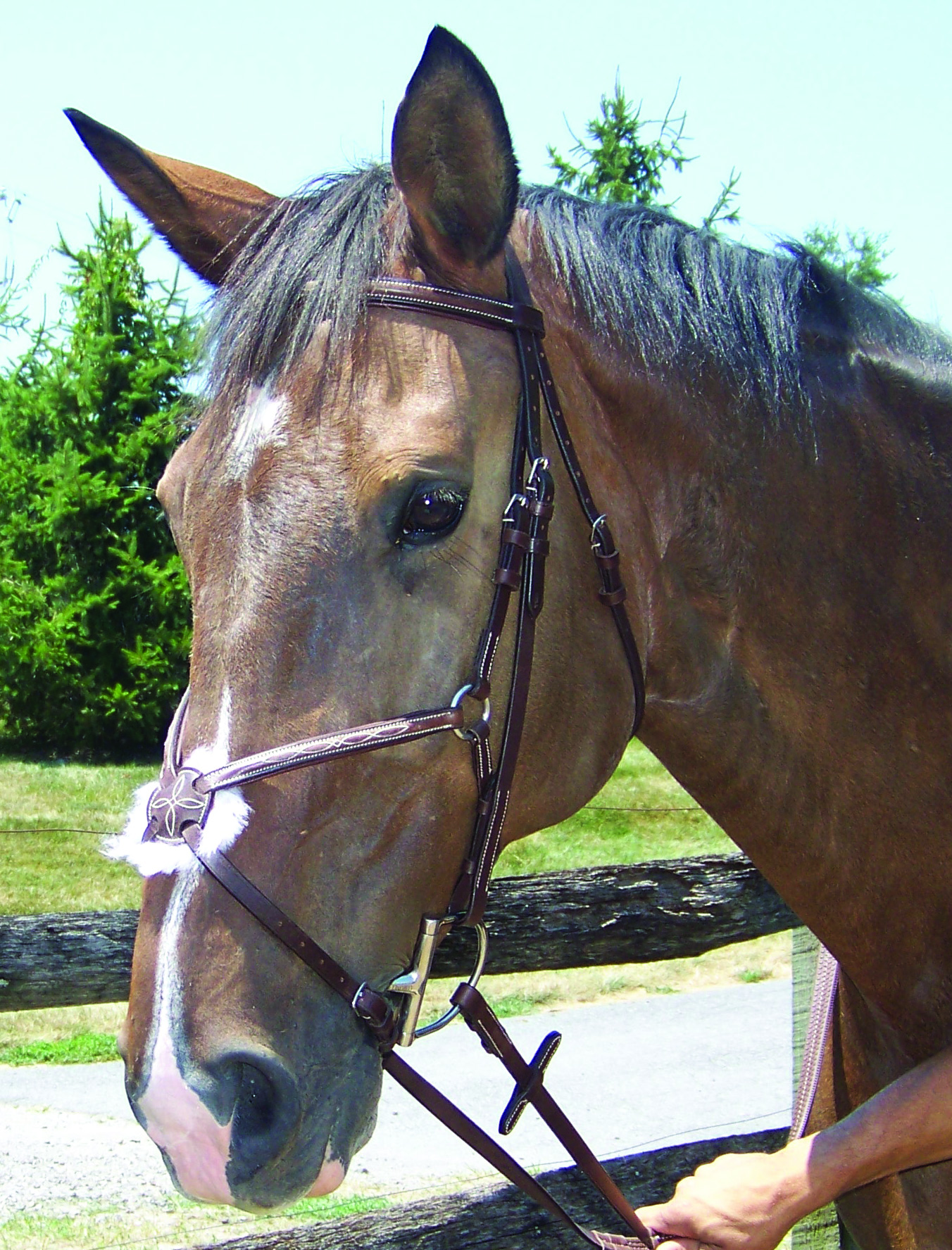 ProAm Fancy Raised Figure 8 Bridle