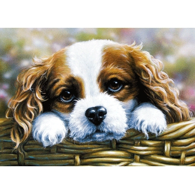 Take Me Home (Cavalier King Charles) Blank Greeting Cards - 6 Pack