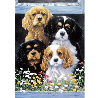 The Window Box (Cavalier King Charles) Blank Greeting Cards - 6 Pack