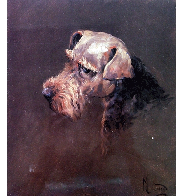 Welsh Terrier By: Malcom Coward