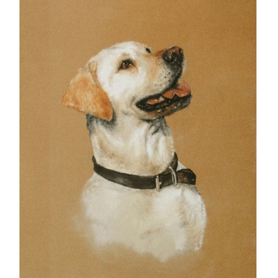 Yellow Lab Study By: Debbie Gillingham
