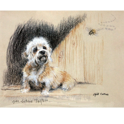 Dandi Dinmont By: Gill Evans, Matted