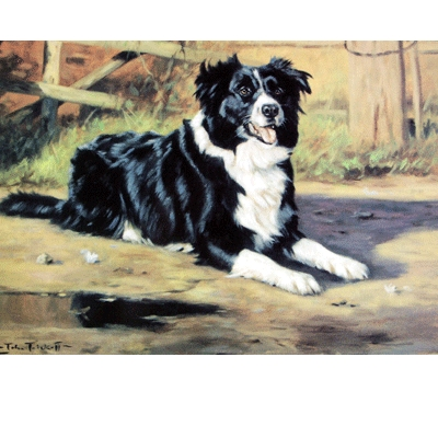 Anticipation (Border Collie) Blank Greeting Cards - 6 Pack