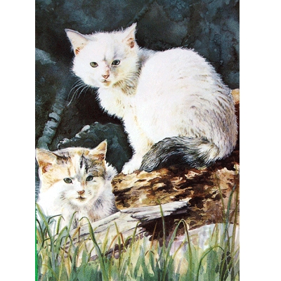 Kittens at Play Blank Greeting Cards - 6 Pack