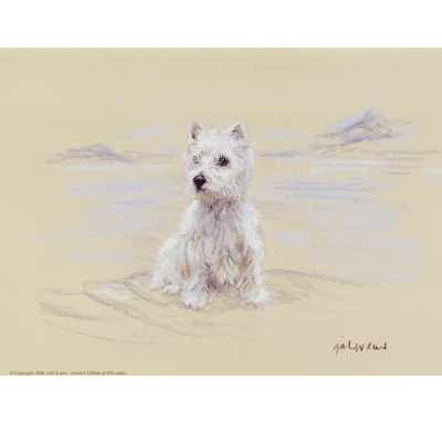 West Highland Sitting By: Gill Evans, Matted