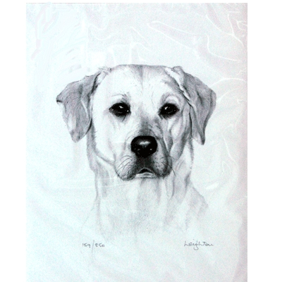 Yellow Labrador By: Sandra Leighton, Matted