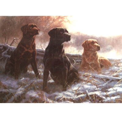 A Full Set (Labrador Retrievers) Blank Greeting Cards - 6 Pack