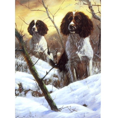Searching (English Springer) Blank Greeting Cards - 6 Pack