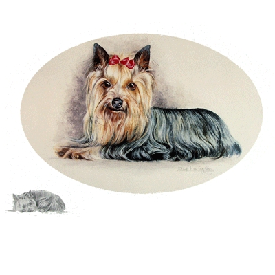 Yorkshire Terrier by: Josephine Copley