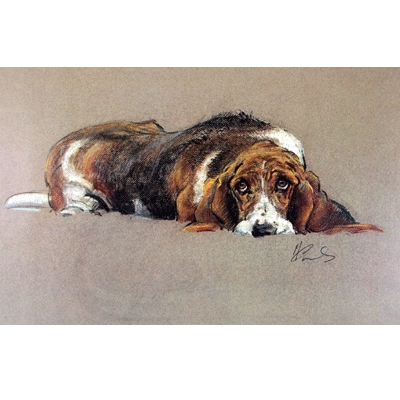 The Basset Hound By: Malcom Coward