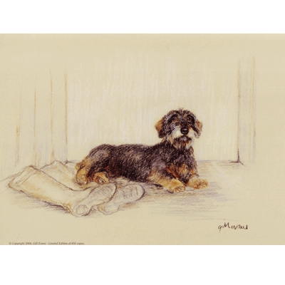 Wire Haired Dachshund By: Gill Evans, Matted