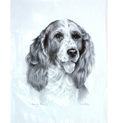 Springer Spaniel By: Sandra Leighton, Matted