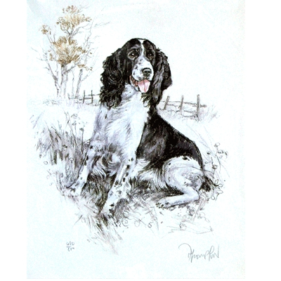 Springer Spaniel By: David Thompson, Matted
