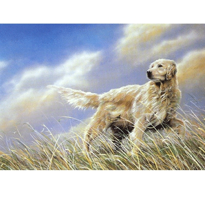 A Breezy Day (Golden Retriever) Blank Greeting Cards - 6 Pack
