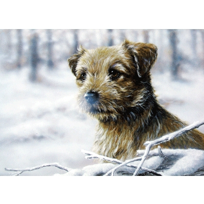 Snow Border (Border Terrier) Blank Greeting Cards - 6 Pack