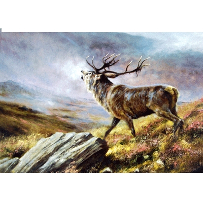 The Challenge (Deer) Blank Greeting Cards - 6 Pack